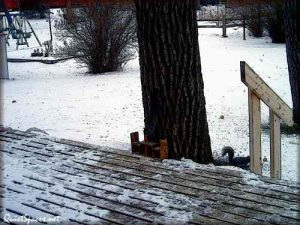 the squirrels in the back yard at winter