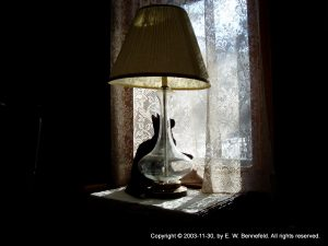 black cat in a dark room, sitting under a lamp and looking out the window through lace curtains