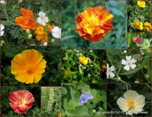 collage of wildflower photos