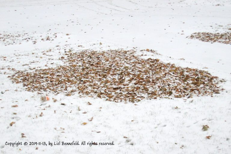 pile of brown, fallen leaves on top of the snow in the front yard