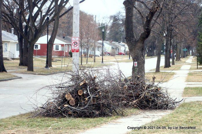 dead tree bramcjes